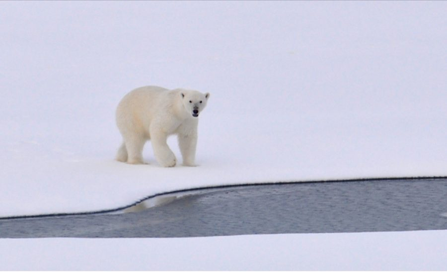 Race to Save The Arctic: Oil Rigging Threat