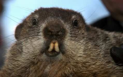 Groundhog Day: Why?!