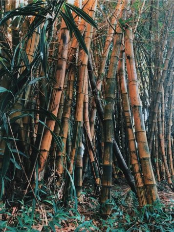 Nature and greenery are proven to have a calming influence on one's mood. Bamboo is fast growing and thrives indoors with little care.